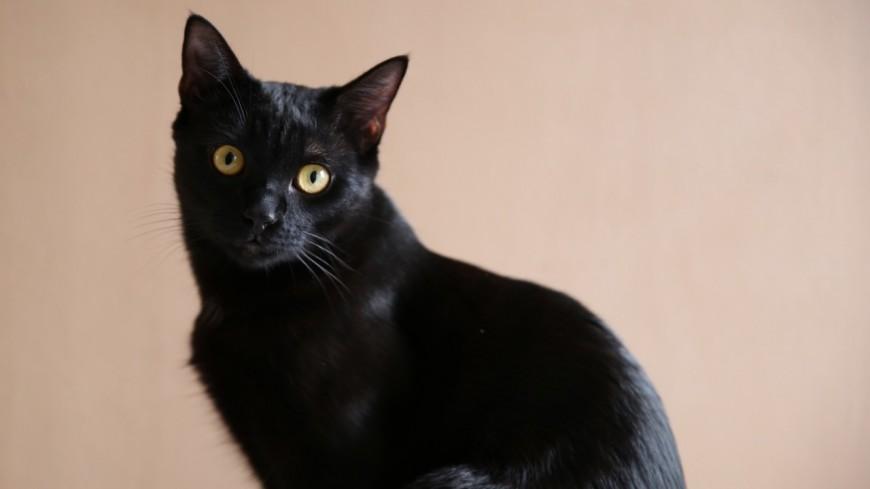 Fontaine : un chat tué par balle, le voisin soupçonné