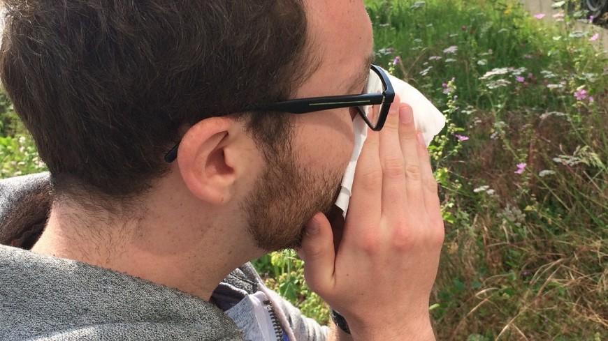 Pollens de graminées : le risque allergique très élevé en Isère