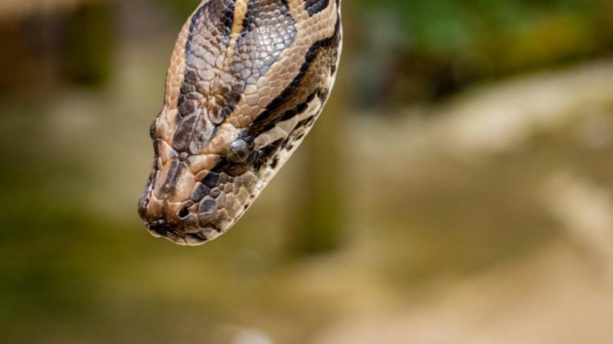 Insolite - En voulant se doucher, une femme découvre un serpent qui sort de sa baignoire (vidéo)