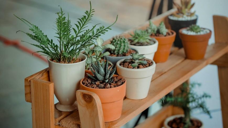 GRENOBLE - Une grande vente de plantes organisée ce vendredi !