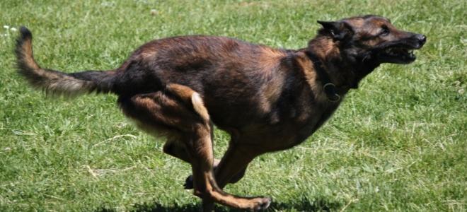 Echirolles : une femme rouée de coups et mordue par un chien