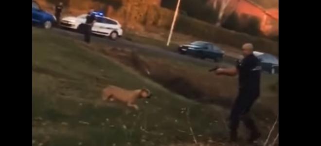 Isère : la police tire sur un chien dangereux, l'animal euthanasié